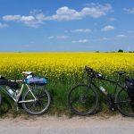 Rapsfeld mit Fahrrädern auf dem Radweg Eberswalde nach Prenzlau