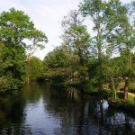 Fahrradweg im Spreewald (Gurkenradweg) Spree mit Bäumen